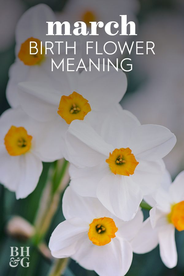 Find Out Your Birth Month Flower And The Meaning Behind It In 2020 Birth Month Flowers Month Flowers March Birth Flowers