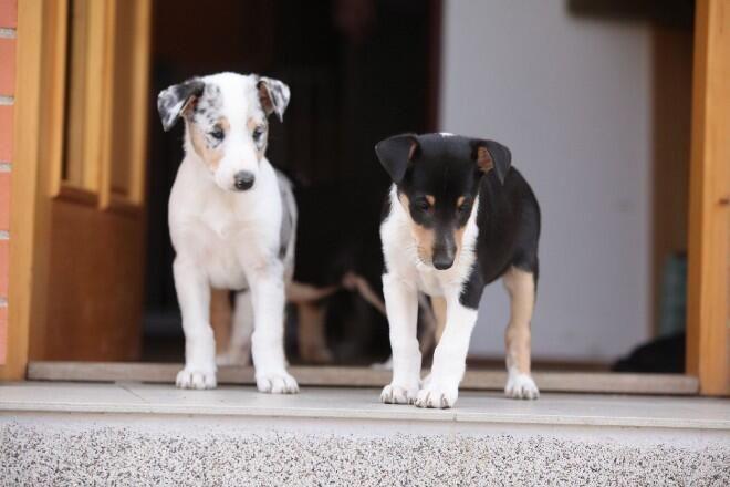 犬用ステップで愛犬に安心を 段差がngな理由 おすすめ犬用ステップとは Docdog ドックドッグ 犬 ドッグステップ 猫
