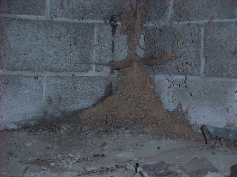 Signs of Termite Infestations - Pictures - Inspections