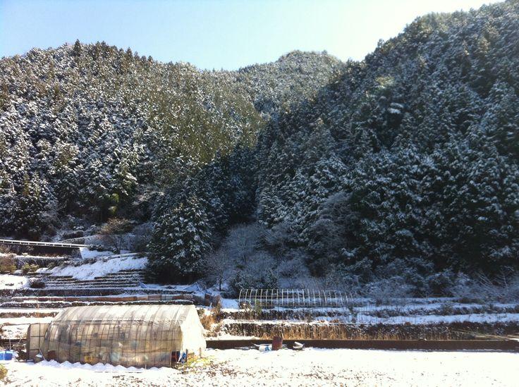 西予市遊子川の雪山2014/02/11