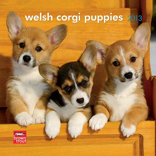 Welsh Corgi Puppies Mini Wall Calendar: Smart, sturdy, and even-tempered, Welsh Corgis are the smallest of the herding dogs. Though the origins of Pembroke and Cardigan Corgis may well differ, both make dependable and devoted companions.  $7.99  http://calendars.com/Welsh-Corgis/Welsh-Corgi-Puppies-2013-Mini-Wall-Calendar/prod201300004631/?categoryId=cat10018=cat10018#