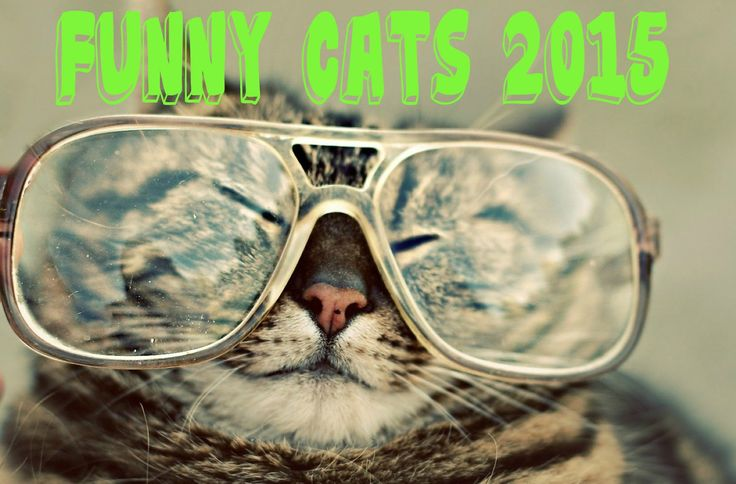 Most Funny Cat Videos 2015