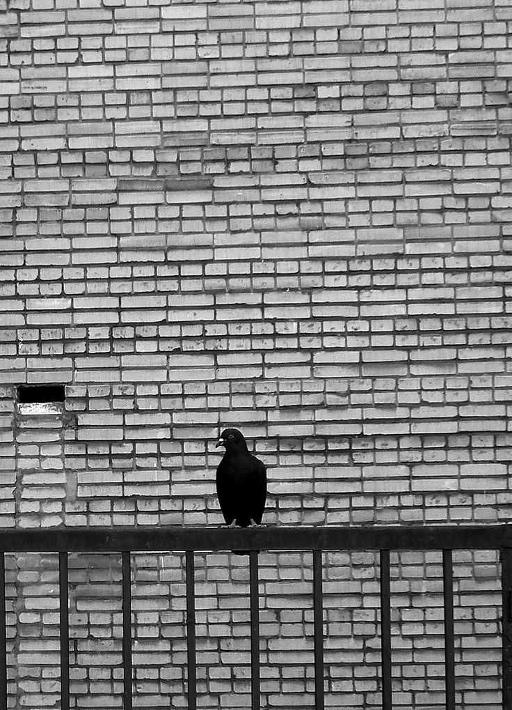 Ziomek z dzielni #photography #city #nature #animal #pigeon #Warsaw #blackandwhite