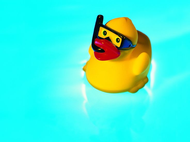 ducks swimming pool - Summer Still Life Photography logo - 1600x1200 wallpaper download