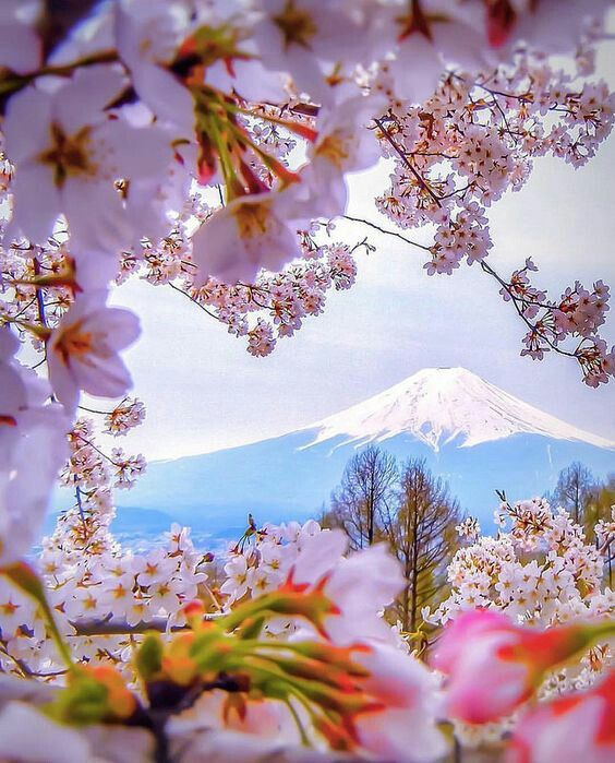 Spring with Mount Fuji as background, Japan