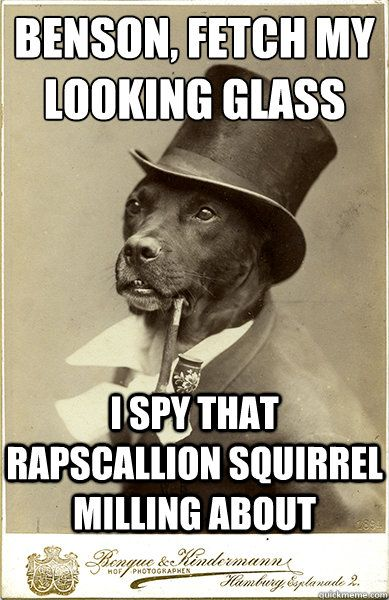 Rapscallion squirrel