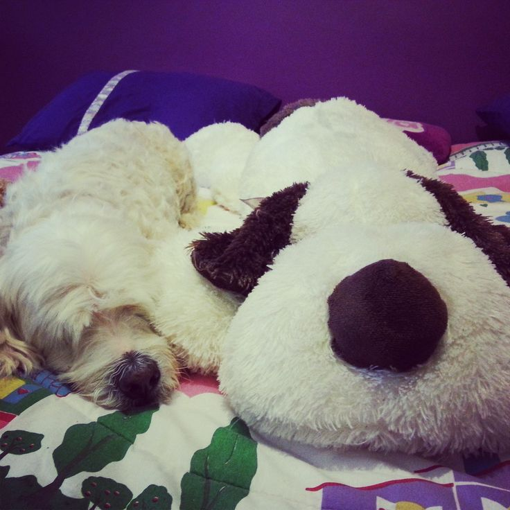 Who is the dog and who is the stuffed animal?