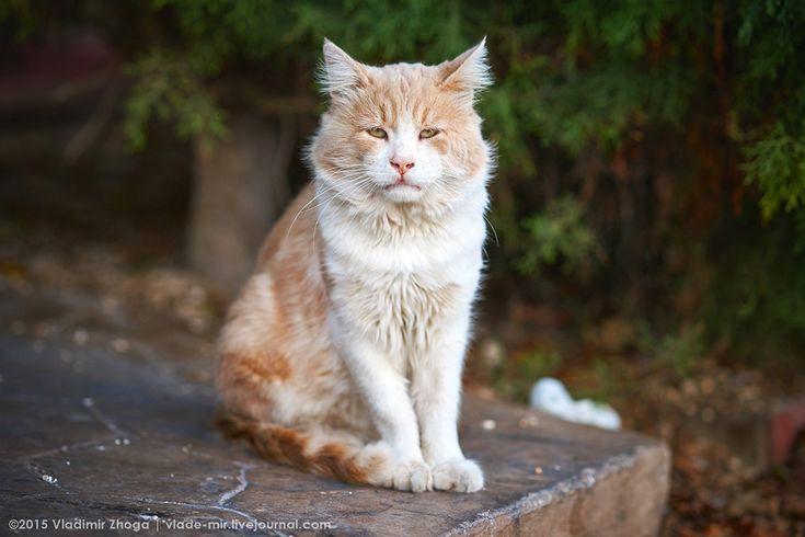 Кипрские коты и кошки. #cyprus #кипр #кошки