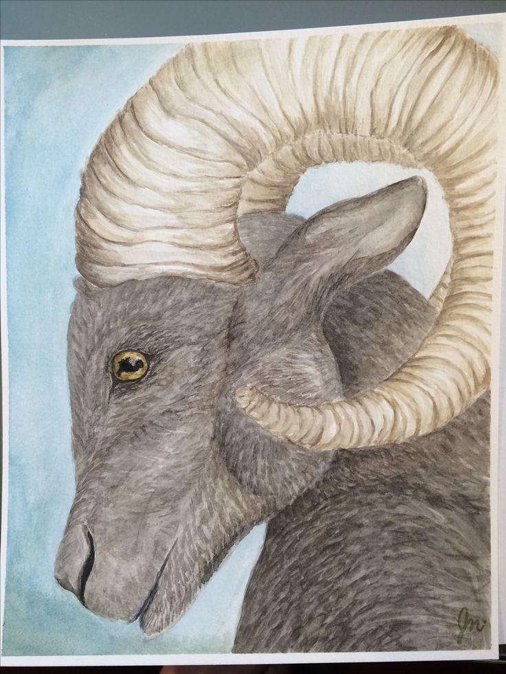 Ram watercolour 10x8