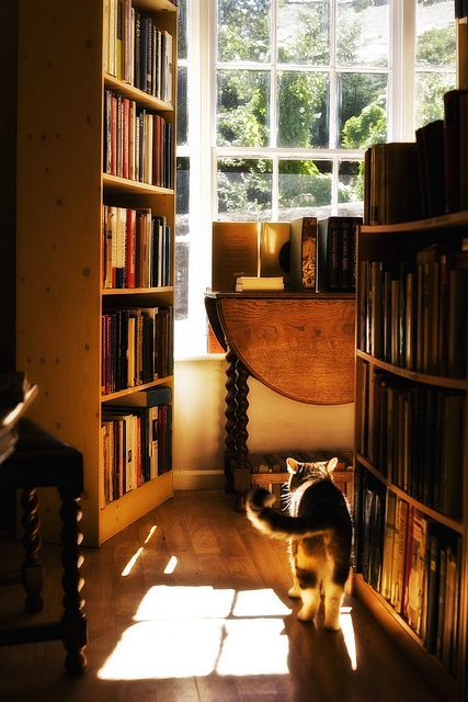book shop cat by stanleymoss, via Flickr
