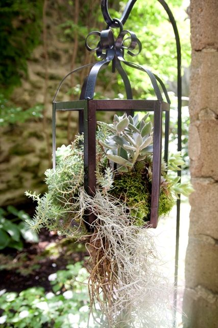 reuse an old light fixture as a decorative hanging planter