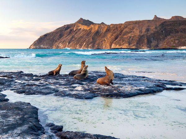 Galapagos Leoni Marini
