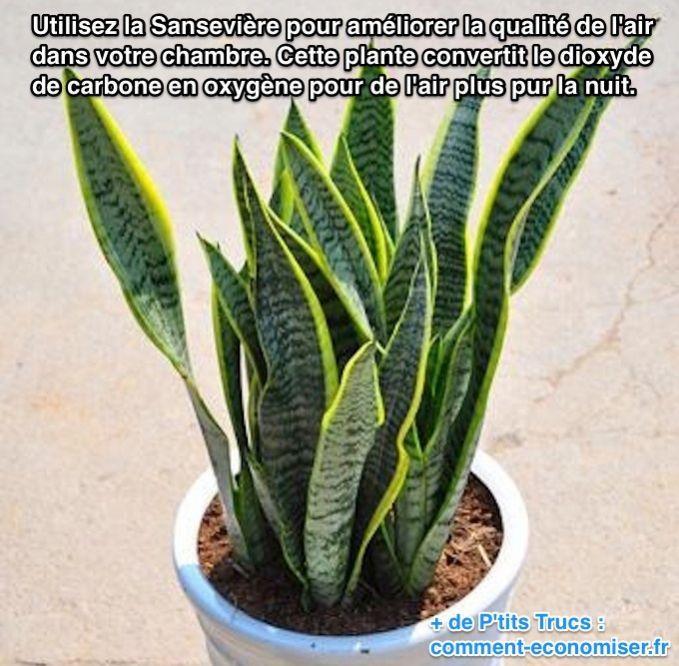 Utilisez la Sansevière pour améliorer la qualité de l'air dans votre chambre. Cette plante convertit le dioxyde  de carbone en oxygène pour de l'air plus pur la nuit.