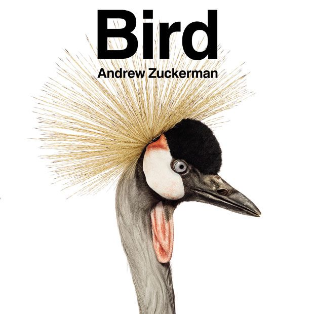 The cover of Andrew Zuckerman's book Bird, featuring an East African Crowned Crane  Picture: ANDREW ZUCKERMAN