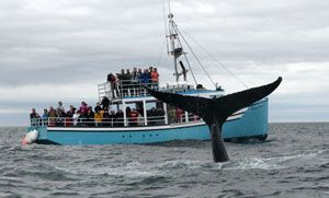 Whale Watching off Brier Island, Bay of Fundy Nova Scotia