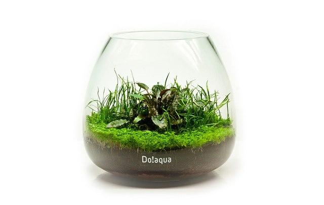 A semi-aquatic version using aquarium soil and some popular aquarium plants.