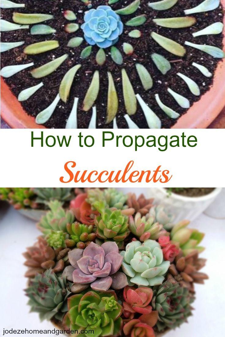 25 b sta propagating succulents id erna p pinterest