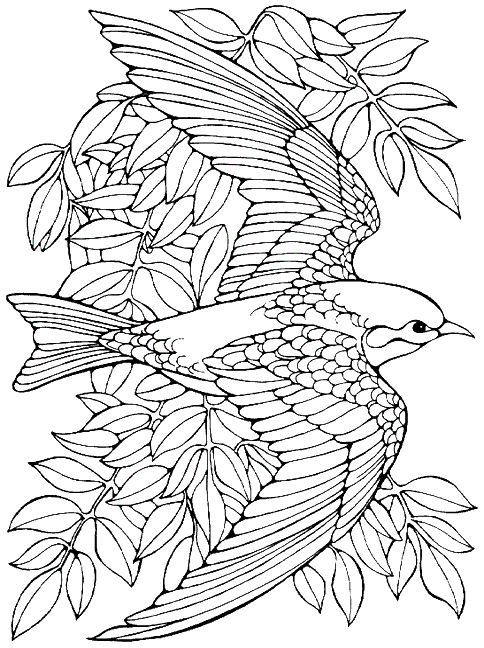 699 best images about fantasy coloring birds feathers on