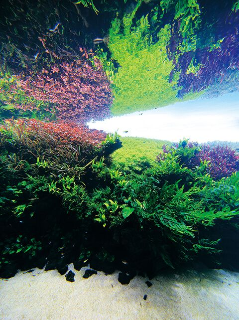 Takashi Amano x Oceanário de Lisboa The Road to the World's Largest Nature Aquarium Takashi Amano, the aquascaper representing Japan, challenges for truly unprecedented and unexplored front.