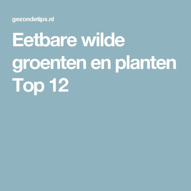 Eetbare wilde groenten en planten Top 12