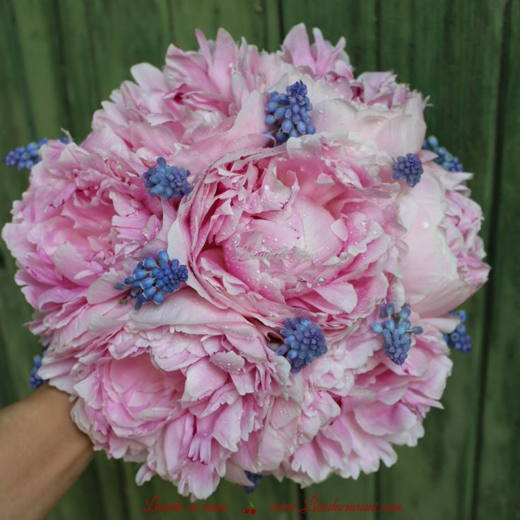 #buchet #nunta #nasa  #mireasa #flori #bujori #lacramioare #margaritar #godmother #bride #bouquet #madewithjoy #paulamoldovan #livadacuvisini #wedding #flowers #weddingflowers #idoflowers #shesaydyes #sayitwithflowers #peonies #peony #convallaria #muscari #scent #elegant