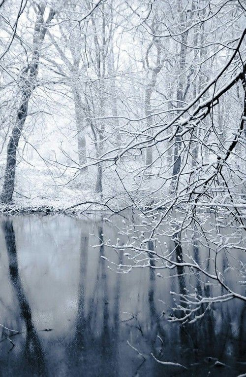 Forest in winter on We Heart It.
