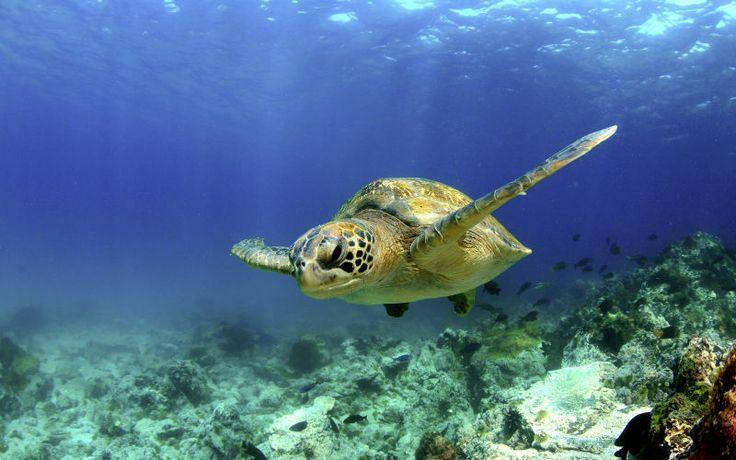 Tobago on yhdistelmä uskomattoman kaunista luontoa, ympärivuotisia trooppisia lämpötiloja ja ihanaa, rentoa tunnelmaa. www.apollomatkat.fi #Tobago #Karibia