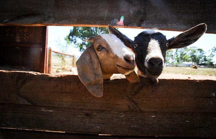 7 Wonderful Ways You Can Help Farm Animals on National Farm Animal Day (and Always)