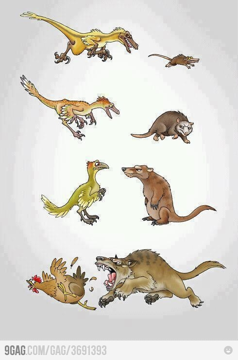 Evolution: Hilarious Memes, Funny Pics, Circles Of Life, Charles Darwin, Funny Pictures, Funny Stuff, Bitch, Evolution, Funny Memes