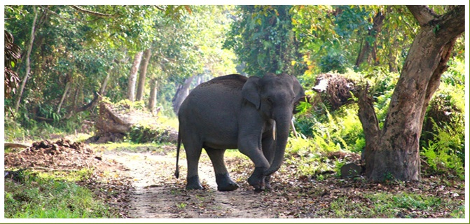 We privides you complete information about assam wild life tour package. Just visit our site and get very nice information and tour package also.
