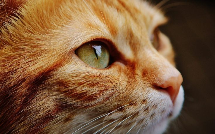 cat face close view eyes portrait | Free HD Wallpapers