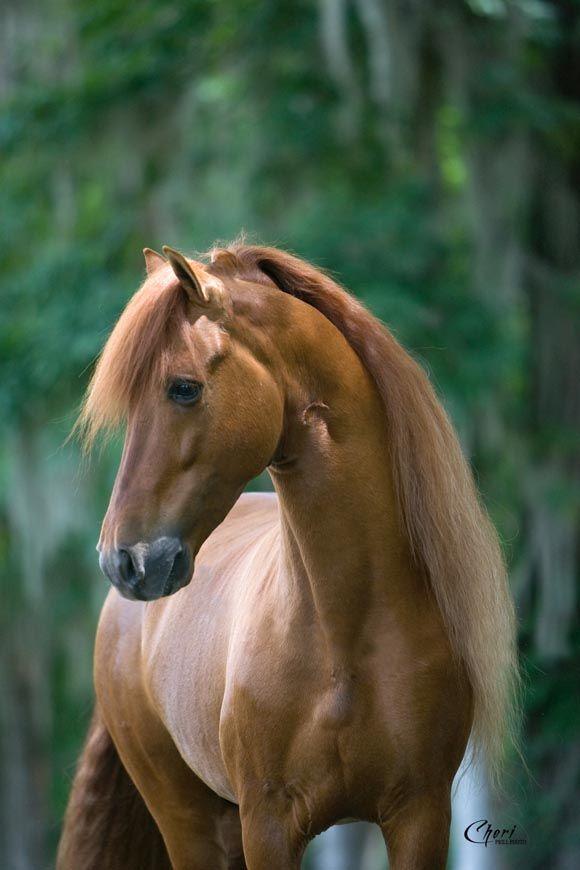 Horse / Verdugo de La Nacion standing in woods