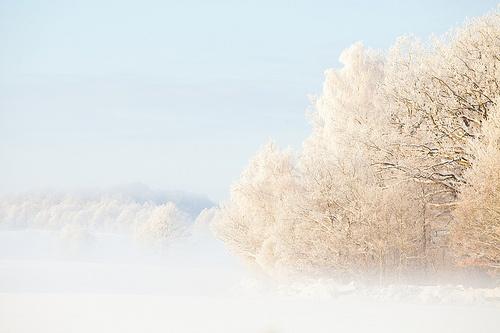 Vinter i Träne