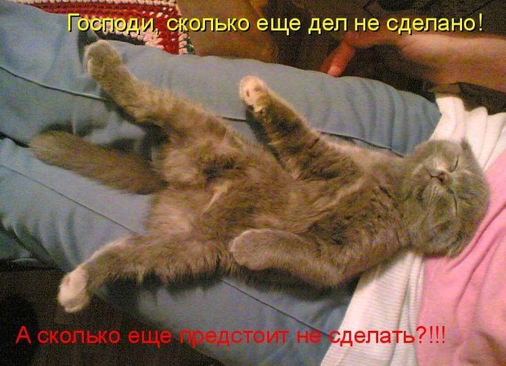 Картинки коты спят с надписями