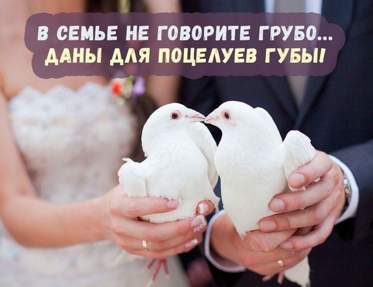 эпизоде прикольные фото с поздравлениями со свадьбой несмотря широкий