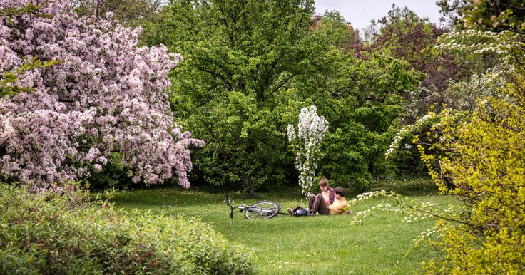 The Buda Arboretum is at the South foot of Gellért Hill; today it is a conservation area and a university campus – we could say it is the Füvészkert of Buda. Once this...
