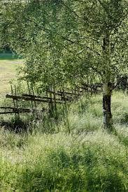 Birch all natural