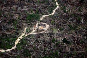 Deforestation area in Maranhão on November 29, 2011