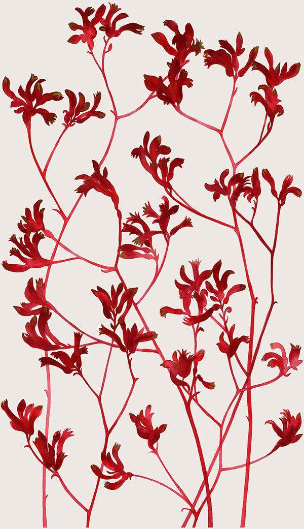 Painted designs featuring Australian native flowers and plants