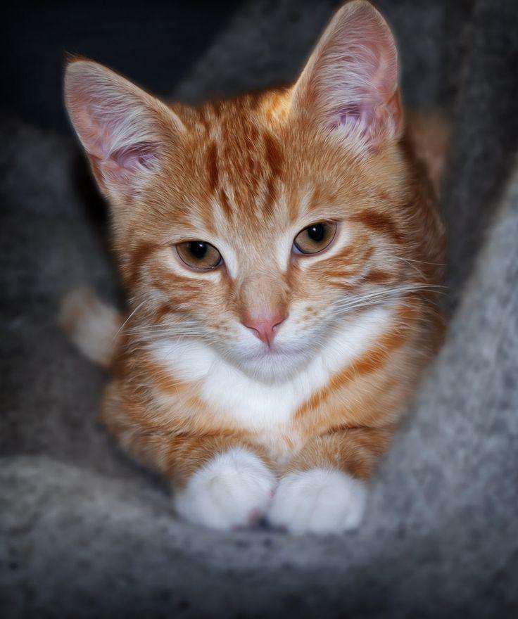 My beloved cat - 12 weeks old