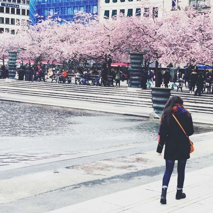 When life gives you cherry blossom #stockholm #travel #plandocheckfashion