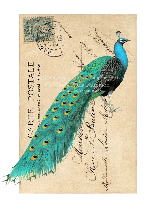 Peacock Card French Vintage Postcard Carte Postale By Mulberrymuse