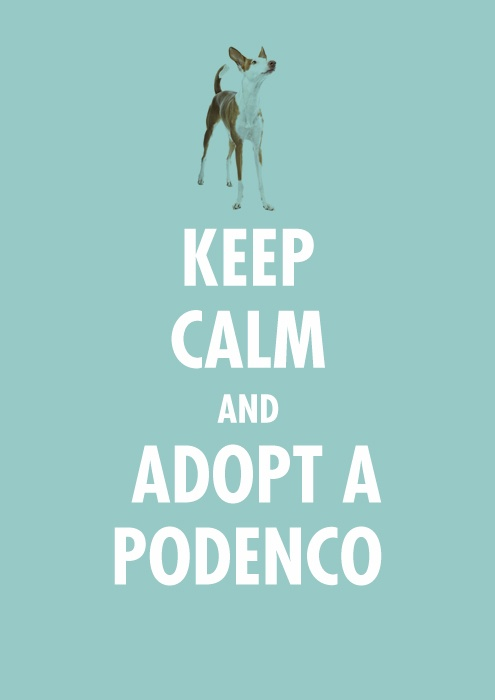 Not sure you can Keep Calm with a Pod!! But adopt one anyway! ❤️