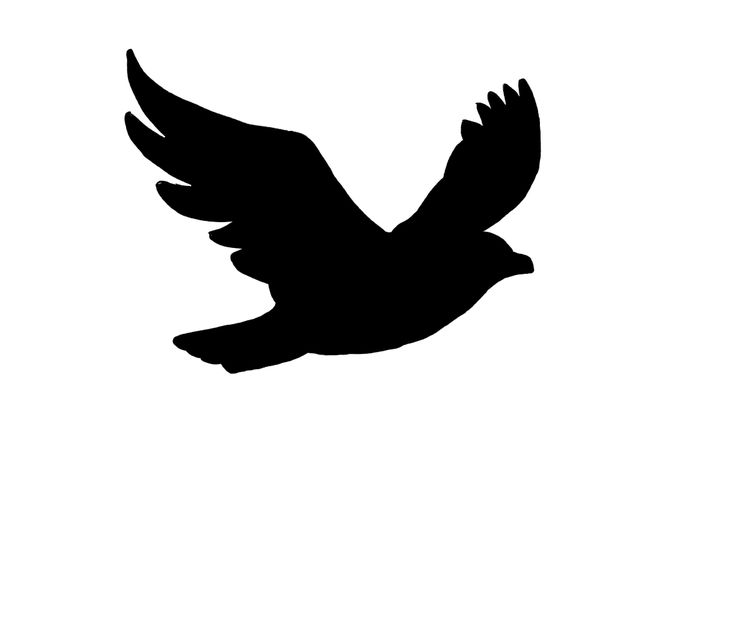 silhouette_bird_flight_by_ ... - ClipArt Best - ClipArt Best