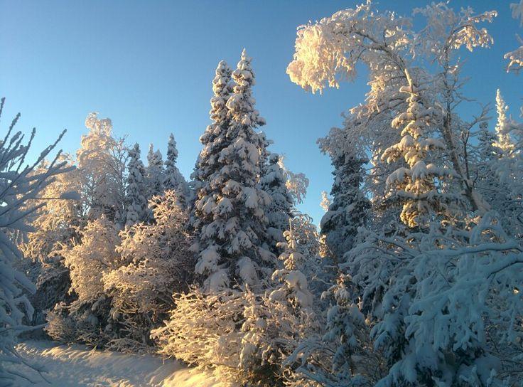A Yellowknife Christmas Winter Wonderland