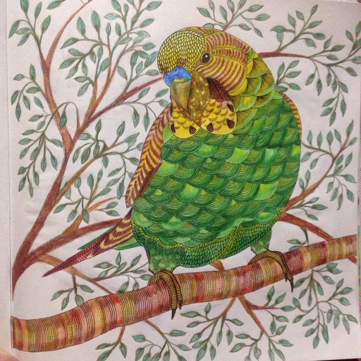 animalkingdom parrot Millie Marotta Millie marotta