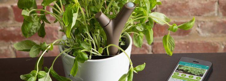 Capire le esigenze delle piante: grazie al sensore Flower Power  Se le piante parlassero… Adesso è a disposizione un prodotto 2.0 che monitora lo stato delle piante e comunica al proprietario come e quando intervenire. http://www.cosedicasa.com/casa-in-fiore/