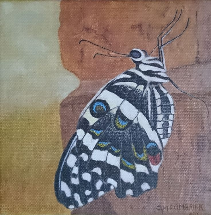 Butterfly Oil Painting 2 - Christiaan Combrink 2016