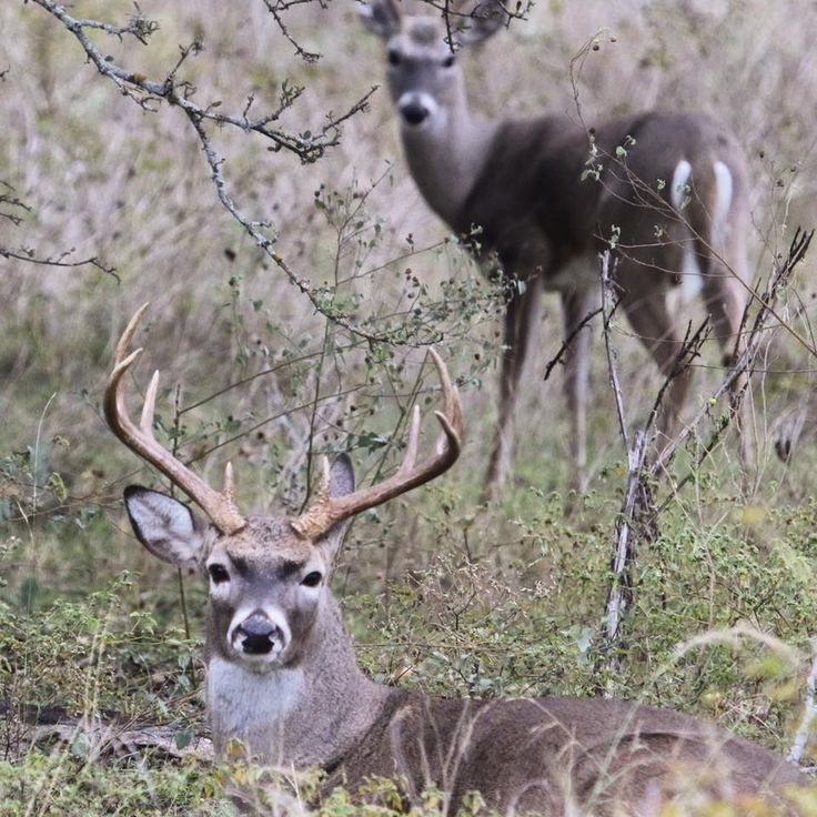 529 best texas agriculture images on pinterest for When does fishing license expire