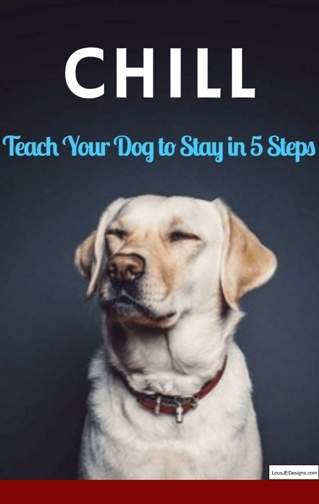 How To Teach A Dog Not To Bark At Doorbell And Pics Of Best